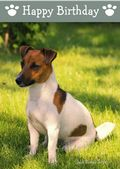 Jack Russell Terrier-Happy Birthday (No Theme)
